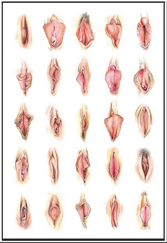 soorten vagina